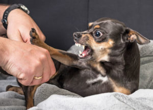 Aggressive dog tips