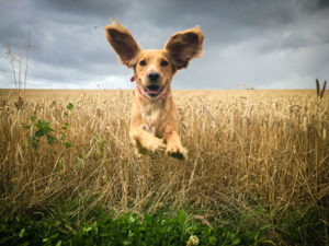 keeping your new dog healthy