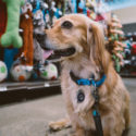 A dog surrounded by display toys in a store